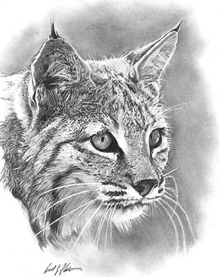 Bobcat Poster by Reed Palmer