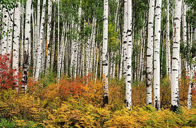Poster featuring the photograph Bold And Magnificent Autumn by Tim Reaves