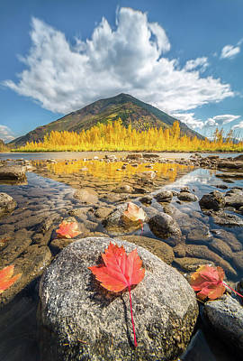 Poster featuring the photograph Bold Fall Colors // Flathead River, Glacier National Park  by Nicholas Parker