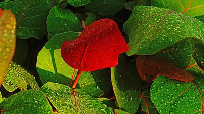 Bold Red Sea Grape Leaf Poster