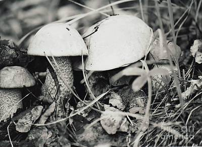 Poster featuring the photograph Boletus Mushrooms by Juls Adams
