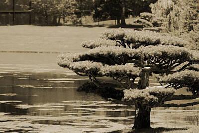 Bonsai Tree Near Pond In Sepia Poster