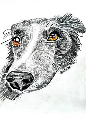 Border Collie Dog Colored Pencil Poster