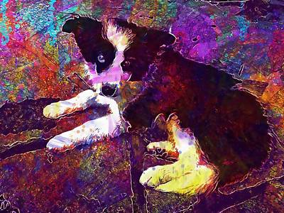 Border Collie Dog Peaceful Puppy  Poster