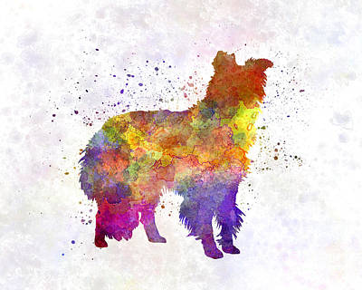 Border Collie In Watercolor Poster