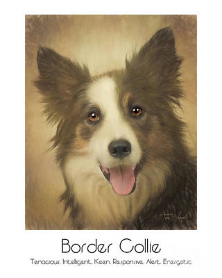 Border Collie Poster Poster