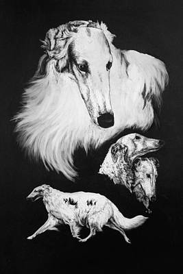 Poster featuring the drawing Borzoi by Rachel Hames