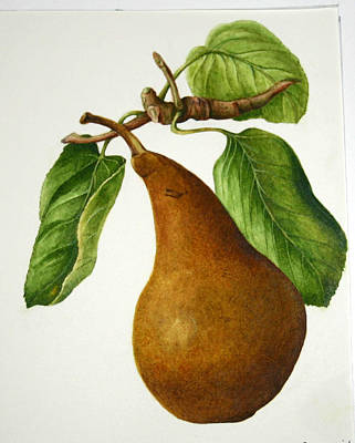 Poster featuring the painting Bosc Pear by Margit Sampogna