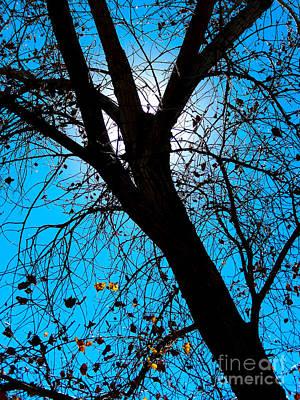 Bosque Silhouette Poster