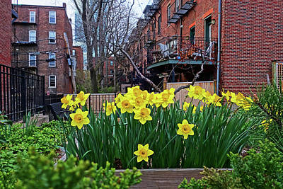 Boston Ma South End Daffodils Poster by Toby McGuire