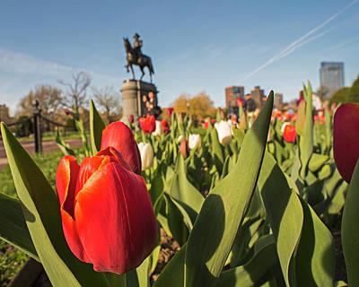 Boston Public Garden Tulips And George Washington Statue 2 Poster