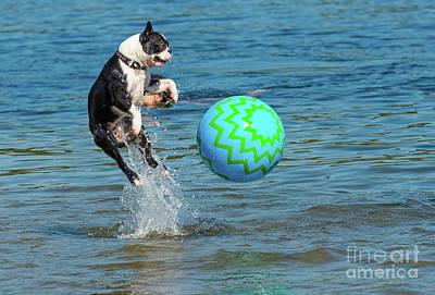 Boston Terrier High Jump Poster