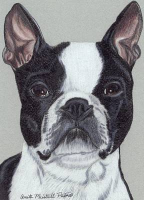 Boston Terrier Vignette Poster