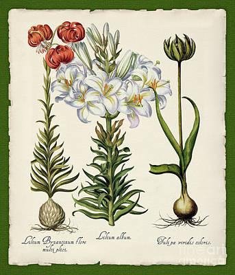 Botanica Nostalgia IIi Botanical Study Poster by Tina Lavoie