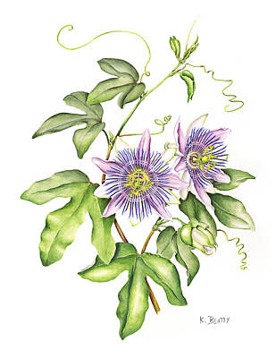 Botanical Illustration Passion Flower Poster by Karla Beatty