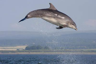 Bottlenose Dolphin - Scotland #3 Poster
