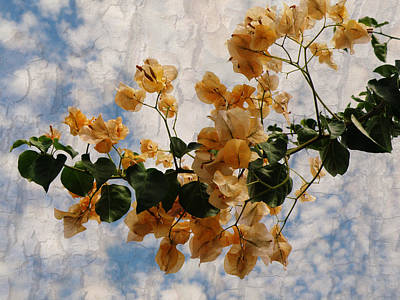 Bougainvillea Bloom Poster by Rose  Hill