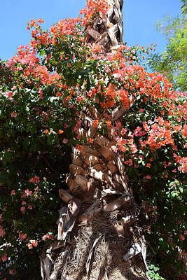 Bougainvillea On Palm Poster by Aimee L Maher Photography and Art Visit ALMGallerydotcom
