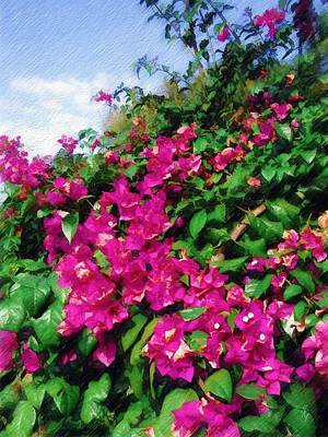 Poster featuring the photograph Bougainvillea by Sandy MacGowan