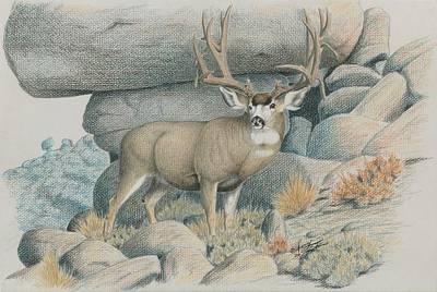 Boulder Buck  Poster