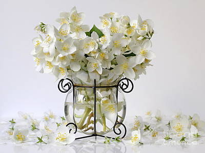 Bouquet Of White Jasmine Flowers In A Vase. Romantic Floral Still Life With Philadelphus Flowers. Poster
