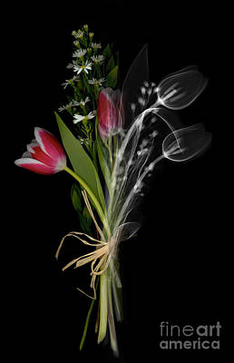 Bouquet X-ray Poster by Ted Kinsman
