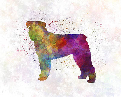 Bouvier Des Flandes In Watercolor Poster