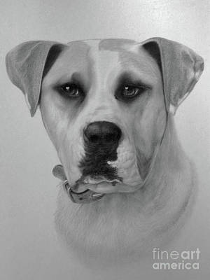 Boxer. Poster