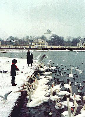 Boy Feeding Swans- Germany Poster by Nancy Mueller