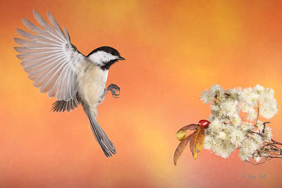 Poster featuring the photograph Braking For The Rose Hip by Gerry Sibell