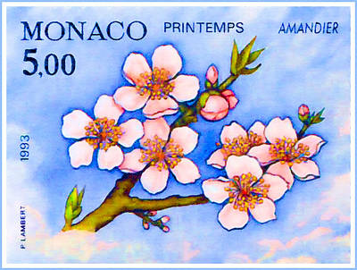 Branch Of An Almond Tree In Spring Poster