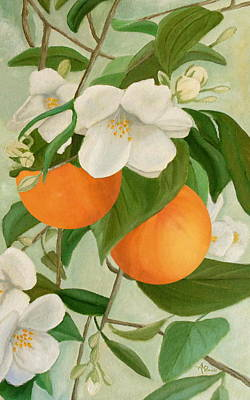Branch Of Orange Tree In Bloom Poster by Angeles M Pomata