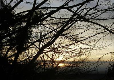 Branches At Sunset Poster by Jaeda DeWalt
