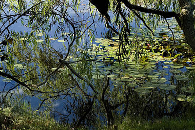 Branches Of Trees Reflected In A Lily Poster