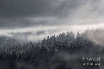 Poster featuring the photograph Breath Of The Forest by Yuri Santin