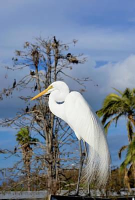 Breezy Egret Poster