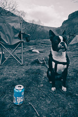 Poster featuring the photograph Brewdog Bull by Justin Albrecht