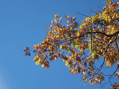 Bright Autumn Branch Poster