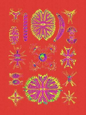 Bright Orange Algaes Poster by Diane Addis