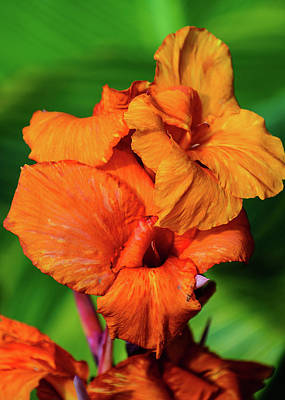 Bright Orange  Poster