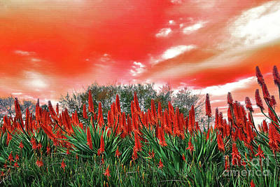 Poster featuring the photograph Bright Red Aloe Flowers By Kaye Menner by Kaye Menner