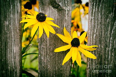 Bright Yellow Autumn Flowers Poster