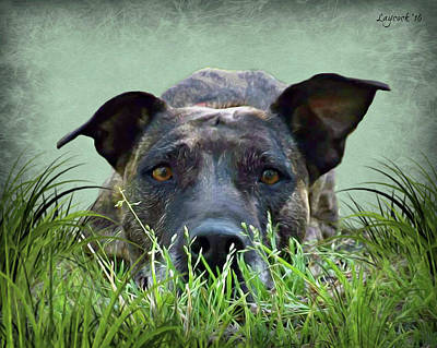 Brindle In Grass Poster