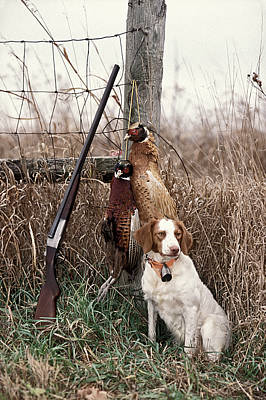 Brittany And Pheasants - Fs000757b Poster