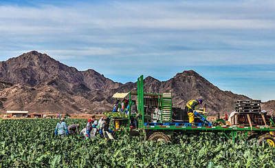 Broccoli Harvest Poster by Robert Bales