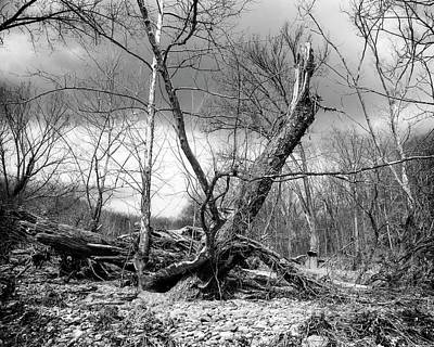 Poster featuring the photograph Broken Tree by Alan Raasch