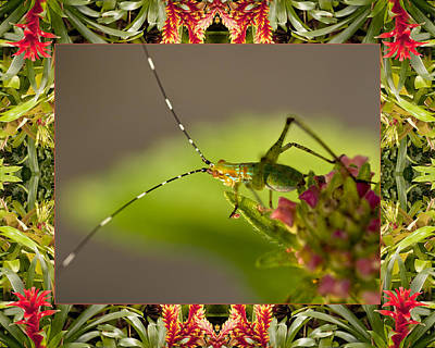 Poster featuring the photograph Bromeliad Grasshopper by Bell And Todd