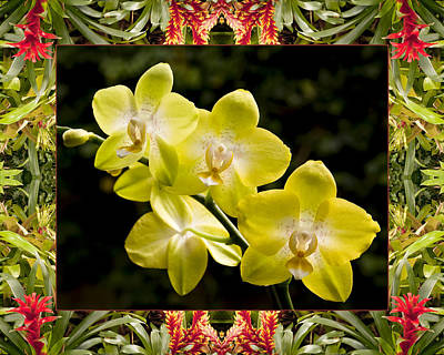 Bromeliad Orchids Poster by Bell And Todd