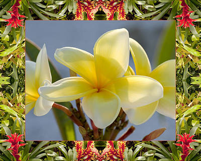 Bromeliad Plumeria Poster by Bell And Todd