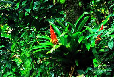 Bromeliads El Yunque  Poster